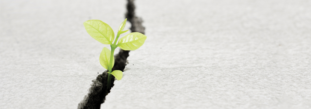 Crack in cement with green plan growing through