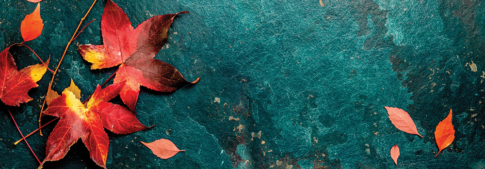Autumn red leaves on blue turquoise background. Copy space. Top view.
