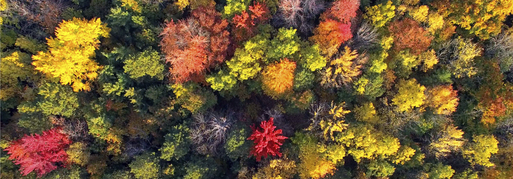 autumn trees from above