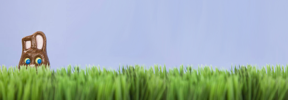 Chocolate Bunny Hiding in grass